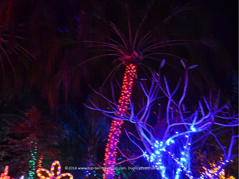 Pretty light display at Florida Botanical Gardens - Holiday Lights 2014