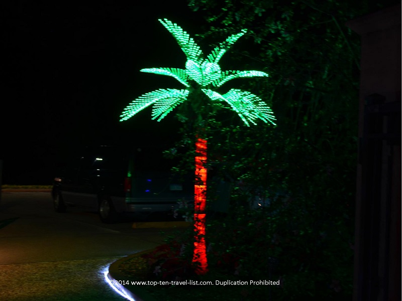Palm tree at Florida Botanical Gardens - Holiday Lights 2014