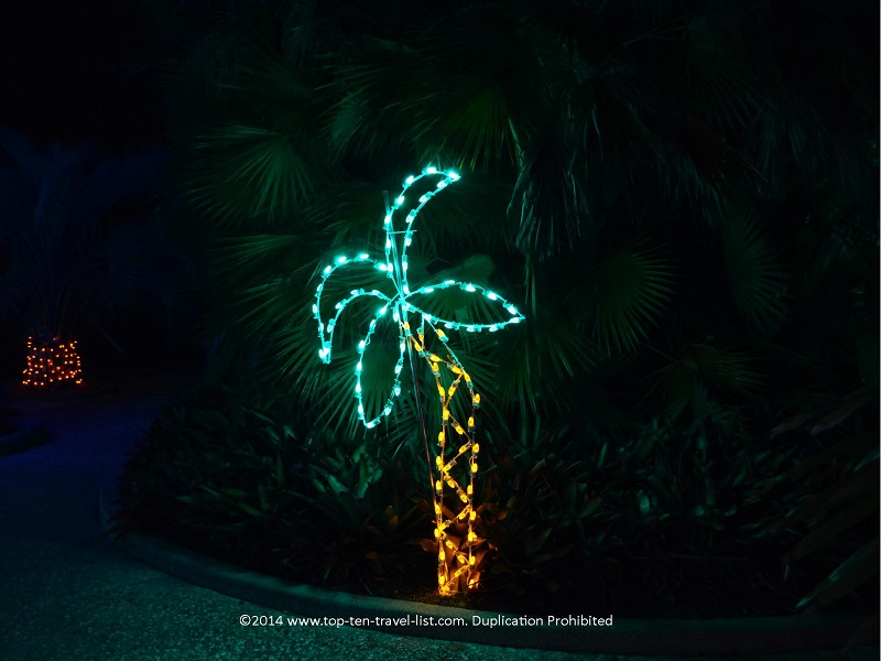 Palm Tree at Florida Botanical Gardens - Holiday Lights 2014