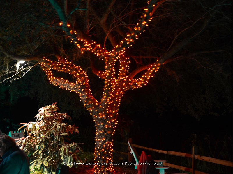 Orange tree lights - Florida Botanical Gardens - Holiday Lights 2014