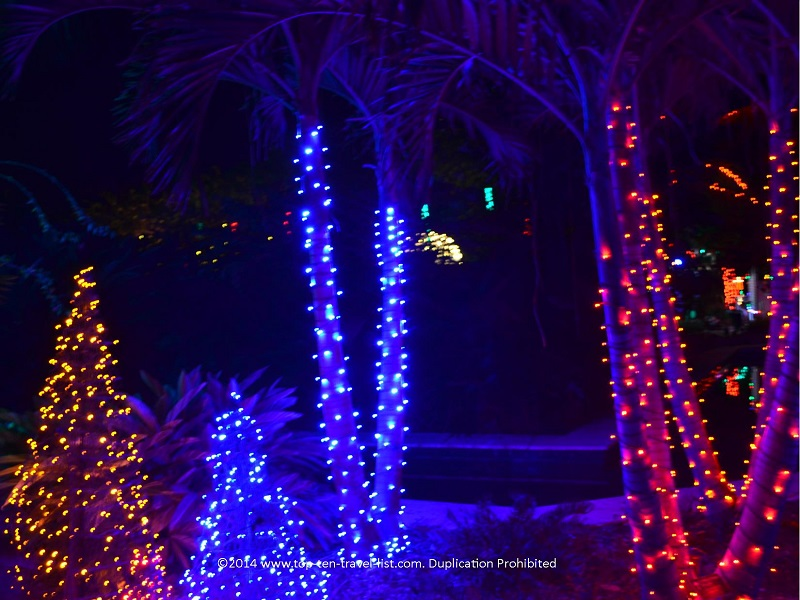 Palm trees lit up for Christmas at Florida Botanical Gardens - Holiday Lights 2014