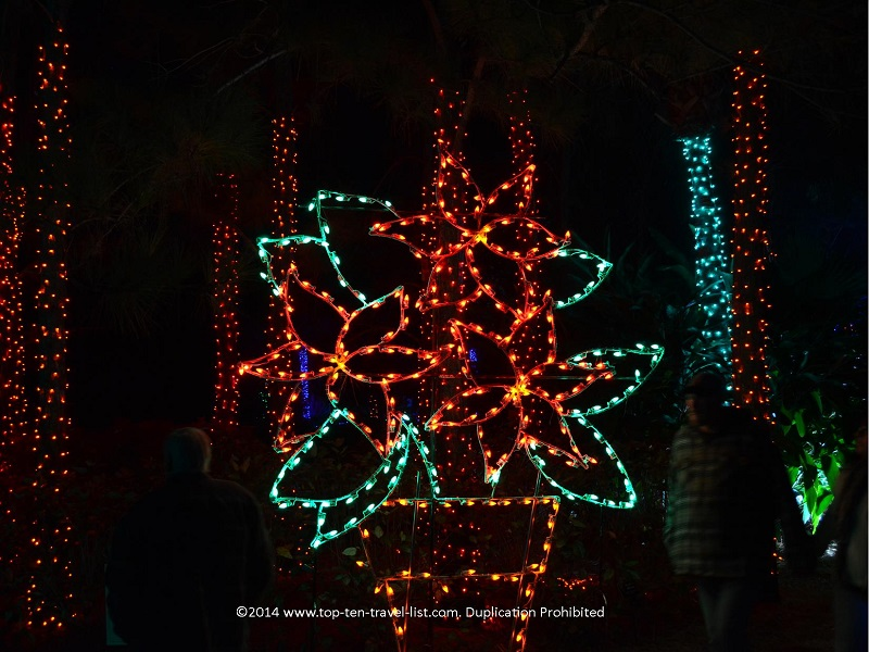 Poinsettia display at Florida Botanical Gardens - Holiday Lights 2014