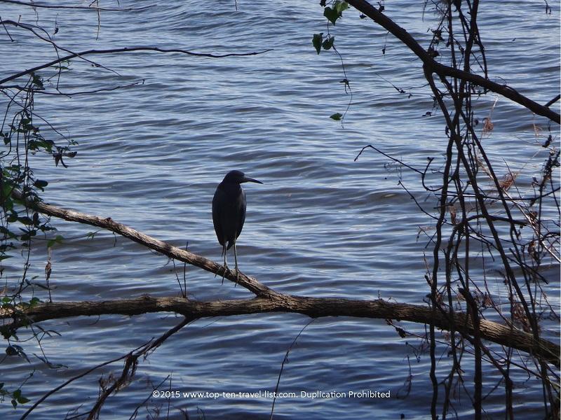 Birdwatching at Circle B Bar Reserve in Lakeland, Florida