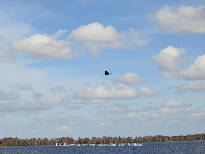 Bird flying over the lake - Circle B Bar Reserve in Lakeland, Florida