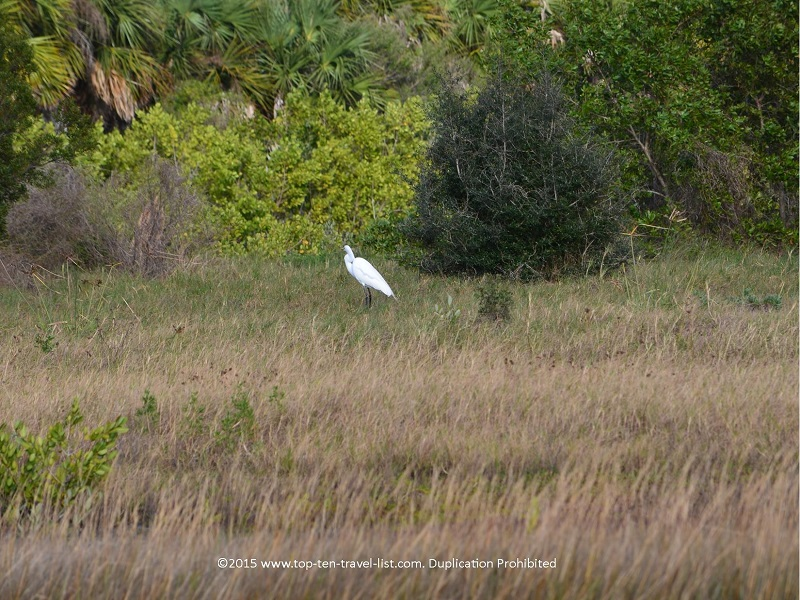 Birdwatching at Robinson Nature Preserve in Bradenton, Florida