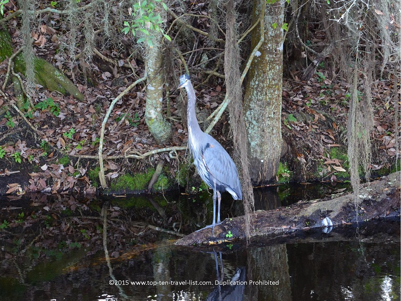 Birdwatching at Circle B Bar Reserve in Lakeland, Florida
