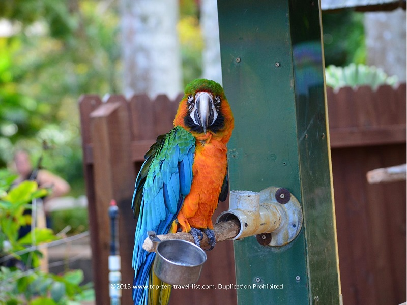 Exotic bird exhibit at Sarasota Jungle Gardens
