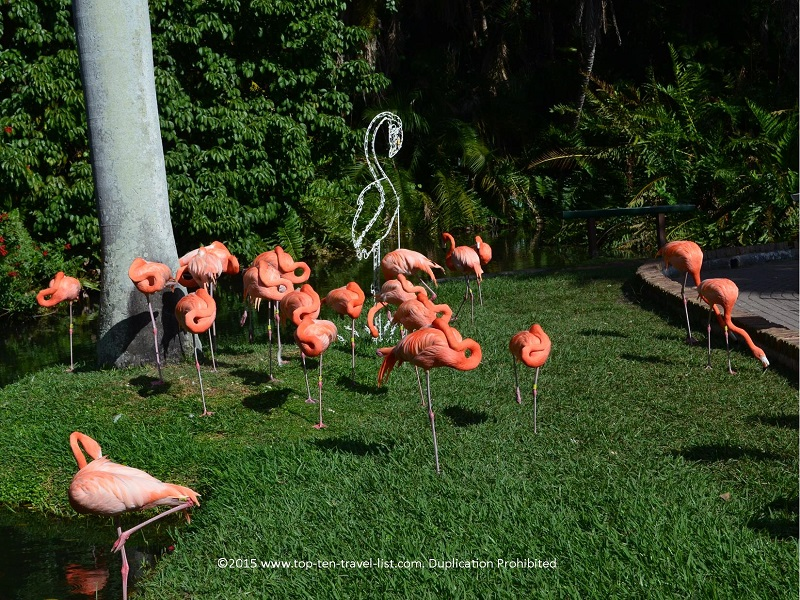 Group of flamingos at Sarasota Jungle Gardens