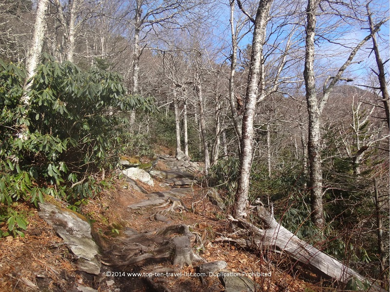 The hike to the top of Grandfather Mountain