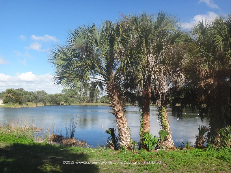 Pretty views of Lake Osprey at Oscar Sherer State Park in Osprey, Florida