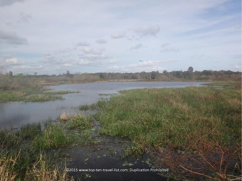 Serene views of a marsh at Circle B Bar Reserve in Lakeland, Florida