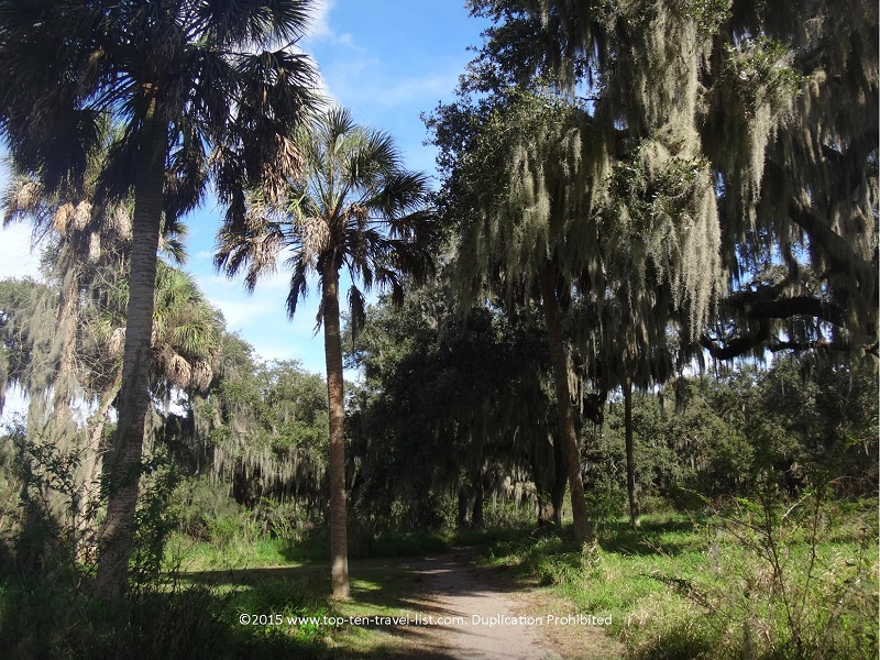 Palm trees and moss trees on the trails at Circle B Bar Reserve in Lakeland, Florida