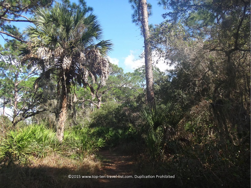 View of the trail at Oscar Scherer state Park in Osprey, Florida