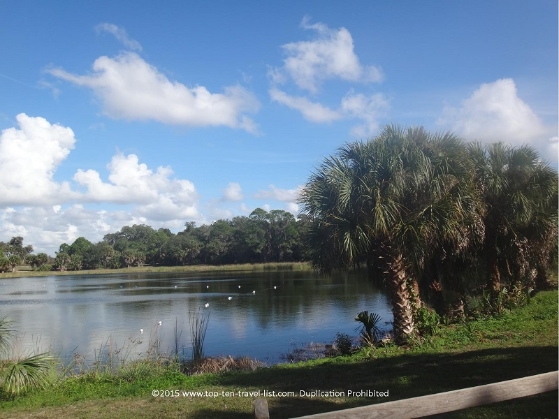 Beautiful lake views at Oscar Scherer State Park in Osprey, Florida