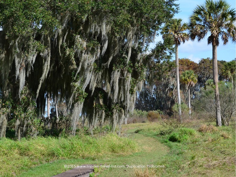Pretty green scenery along a trail at Circle B Bar Reserve in Lakeland, Florida