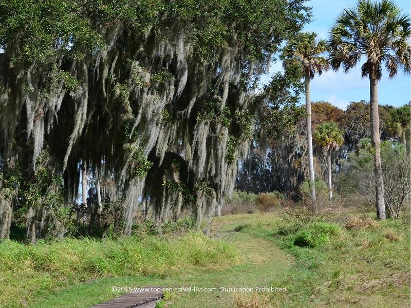 Gorgeous trees lining the Shady Oak Trail at Circle B Bar Reserve in Lakeland, Florida
