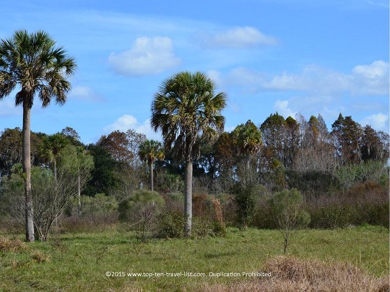 Palm trees on the Shady Oak Trail at Circle B Bar Reserve in Lakeland, Florida