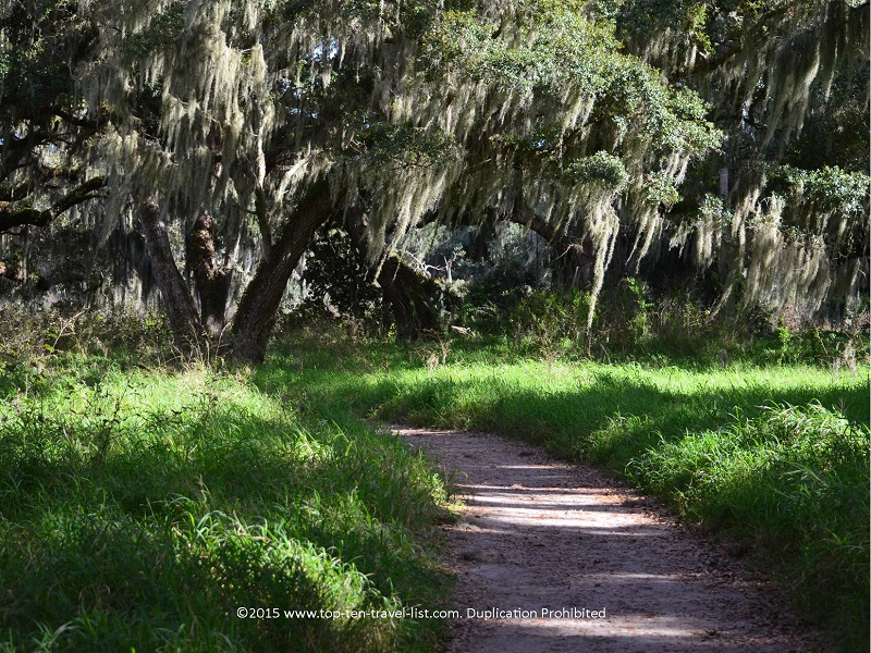 Gorgeous Spanish moss trees on the Shady Oak Trail at Circle B Bar Reserve in Lakeland, Florida