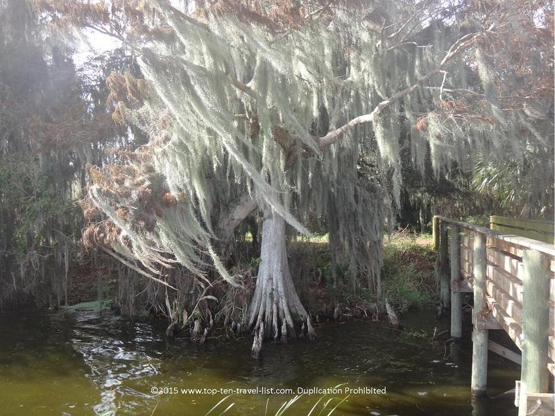 Swampy views down Alligator Alley at Circle B Bar Reserve in Lakeland, Florida