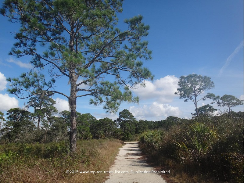 Trail view at Oscar Scherer State Park in Osprey, Florida