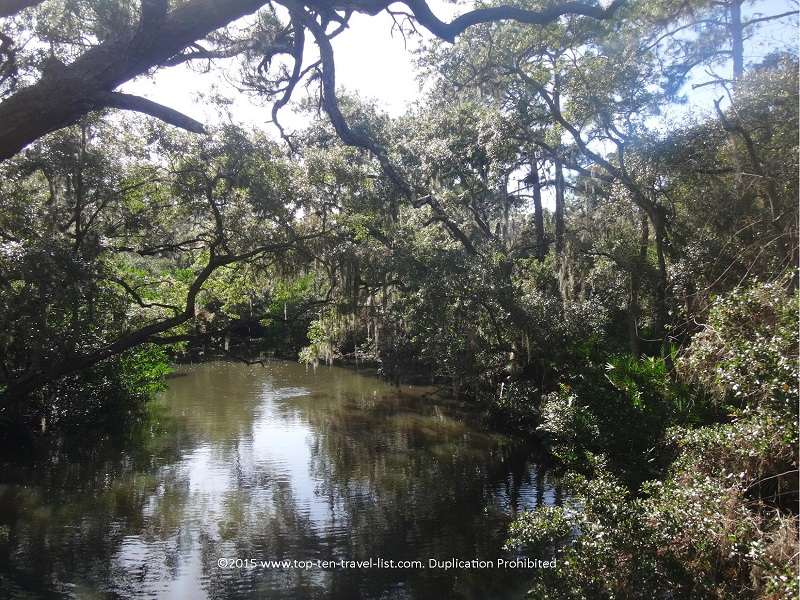 Pretty view of the creek at Oscar Scherer State Park in Osprey, Florida