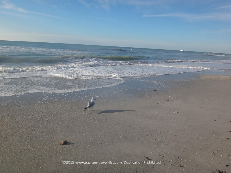 Bird enjoying the day at Sand Key State Beach in Clearwater, Florida