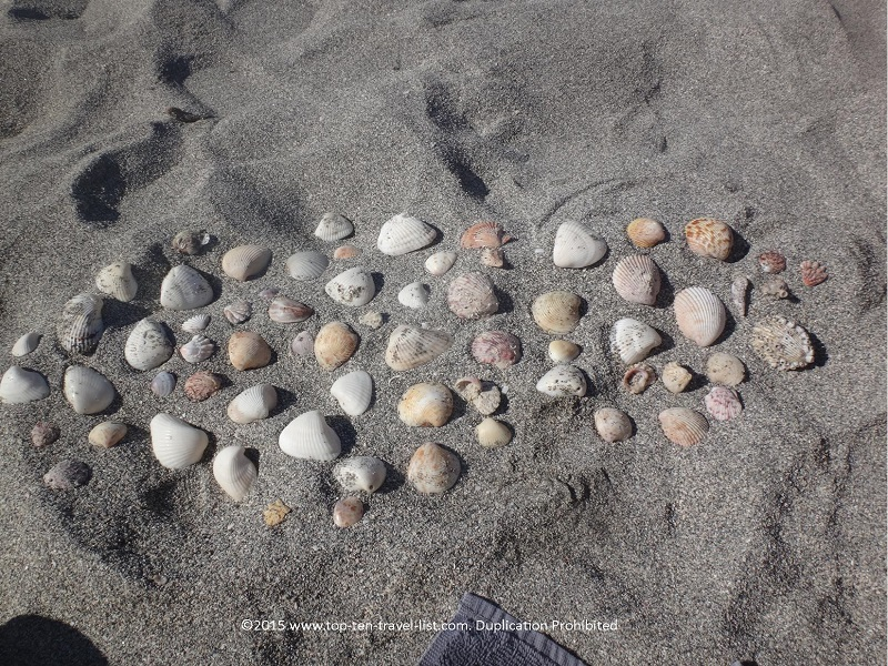 You will find all different types of shells here!