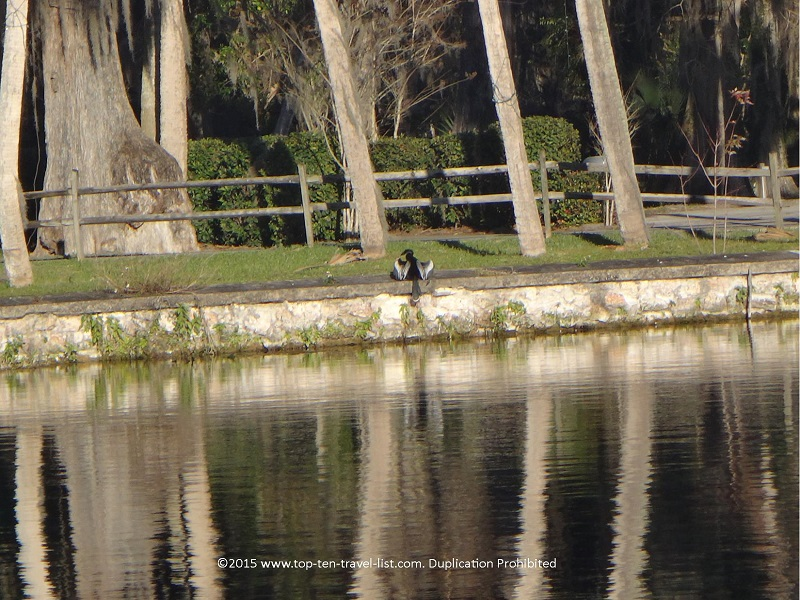 Birdwatching at Silver Springs State Park in Ocala, Florida