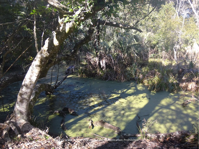Views of swamps while hiking the trails at Fort Clinch State Park in Amelia Island, Florida