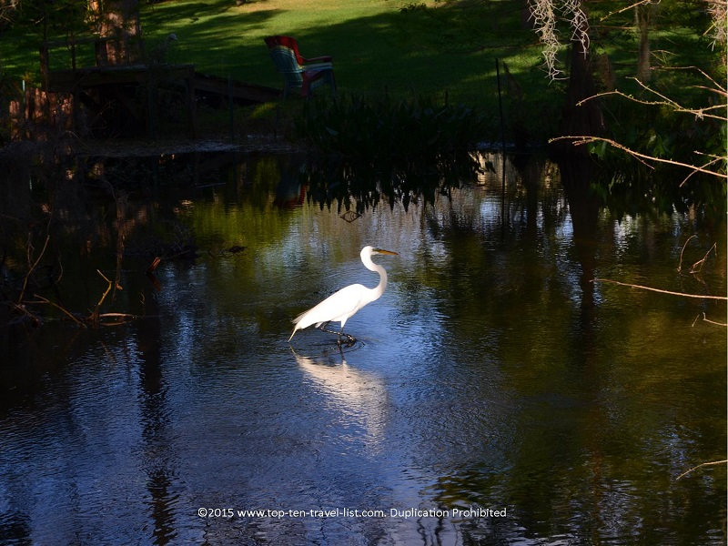 Lots of birds and other forms of wildlife at Mead Botanical Gardens in Winter Park, Florida