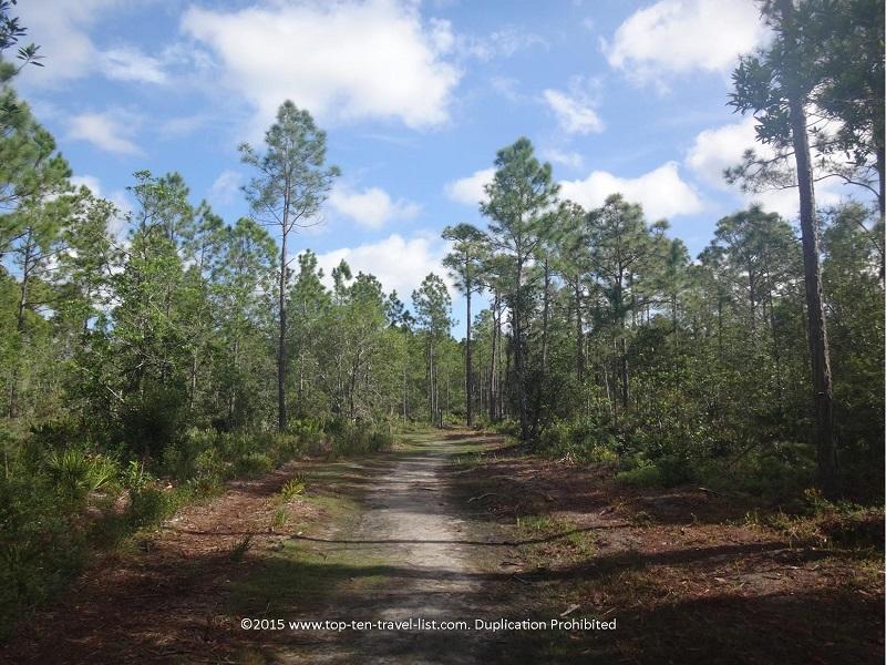 Beautiful nature views at Tibet Butler Nature Preseve in Orlando, Florida