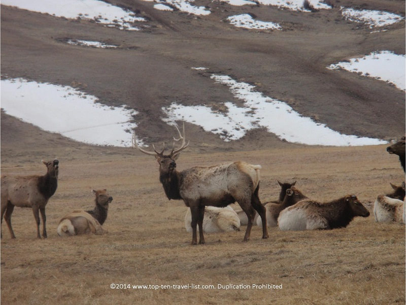 During the spring season, the elk refuge sleigh ride turns into a wagon ride. Not as many elk sightings as during the winter season, but still worth a visit!