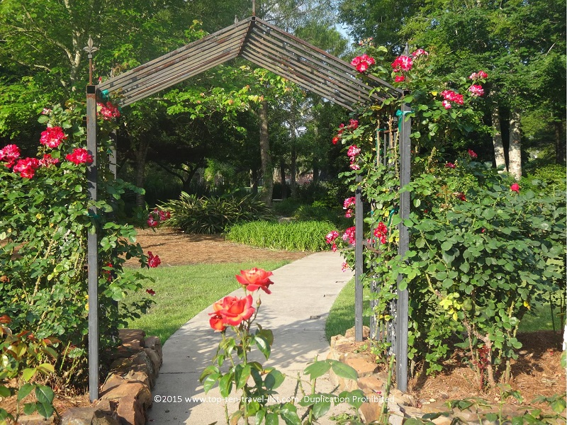 Beautiful rose garden at Beaumont Botanical Gardens in Texas