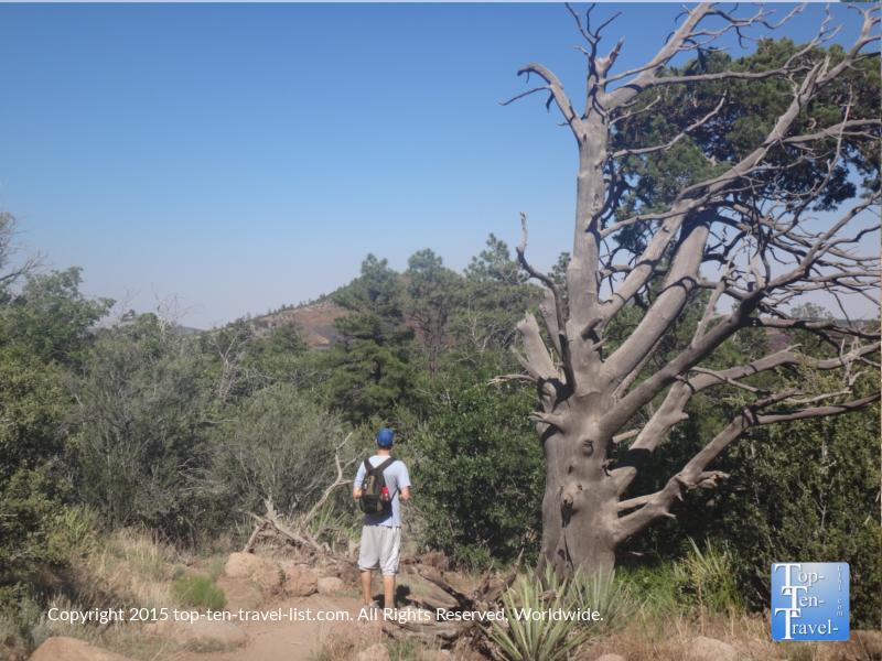Hiking Fatman's loop trail in Flagstaff, Arizona