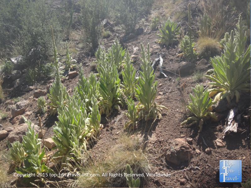 Unique desert plants on Fatman's Loop in Flagstaff, Arizona