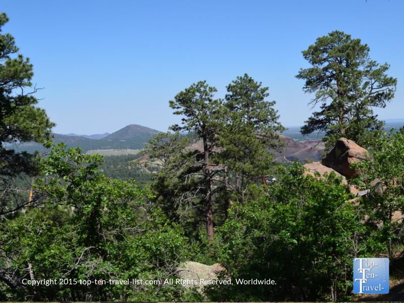 A pretty mix of trees on the Fatman's Loop trail in Flagstaff, Arizona