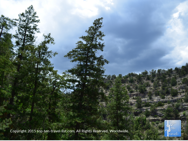 A look at the beautiful pine forests found along the trail.