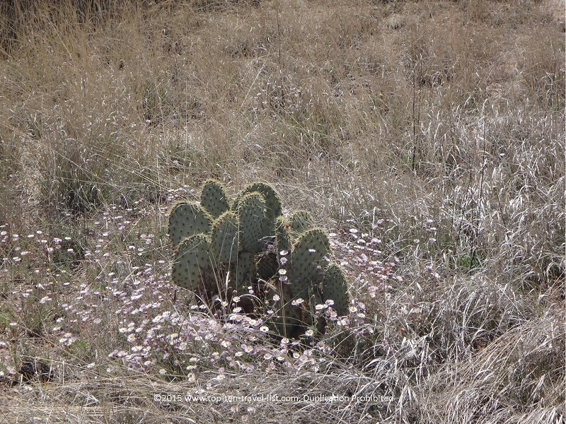 Cactus along the Peavine National Recreational Trail in Prescott, Arizona