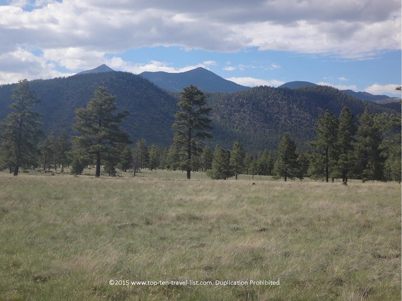Gorgeous trees and mountains on the Buffalo Loop Trail in Flagstaff, Arizona