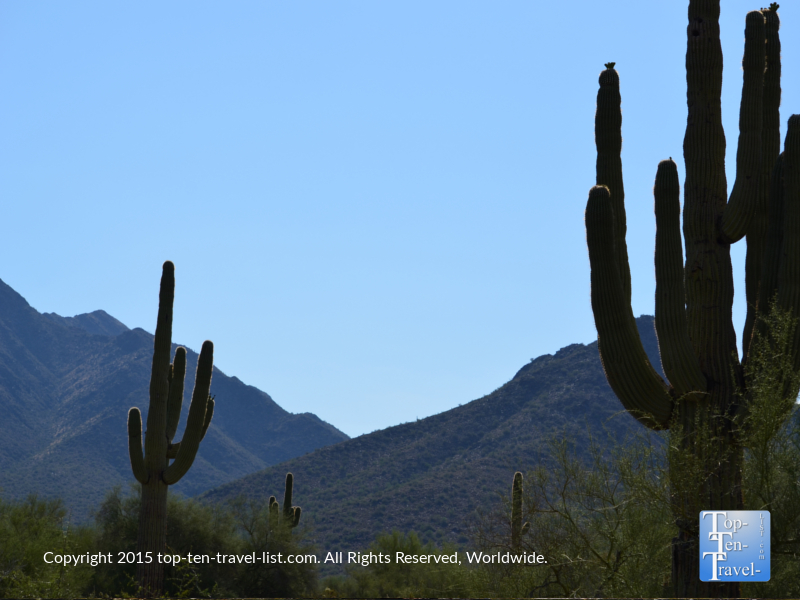 A tall cactus along the Horseshoe Loop at McDowell Sonoran Preserve in Scottsdale, Arizona