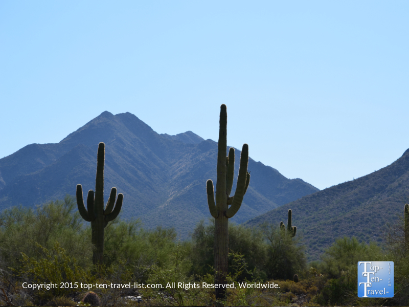 Cacti along the Horseshoe Loop at McDowell Sonoran Preserve in Scottsdale, Arizona