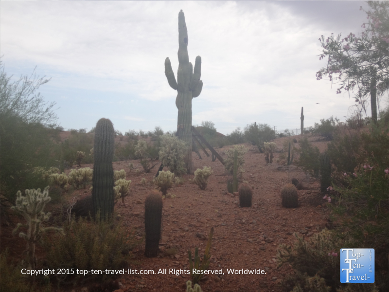 A variety of cacti found at the Phoenix Zoo