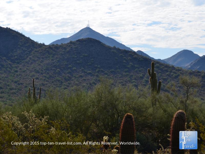 Beautiful desert plants on the Horseshoe Loop at Mcdowell Sonoran Preserve in Scottsdale, Arizona