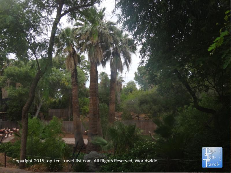 Pretty palms at the Phoenix Zoo