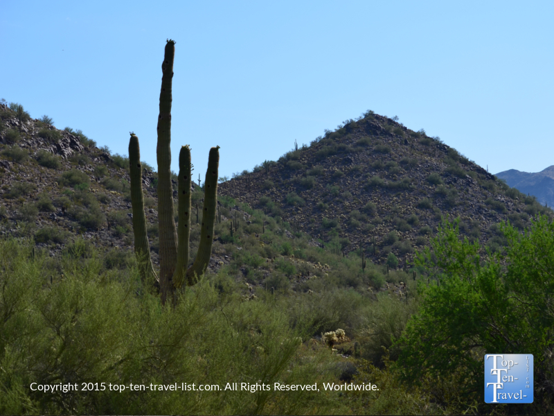 Mountain views and cactus along the Horseshoe Loop at the McDowell Sonoran Preserve in Scottsdale, Arizona