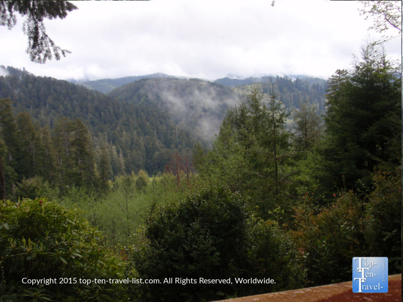 Gorgeous views of redwoods from the overlook at Trees of Mystery in Northern California