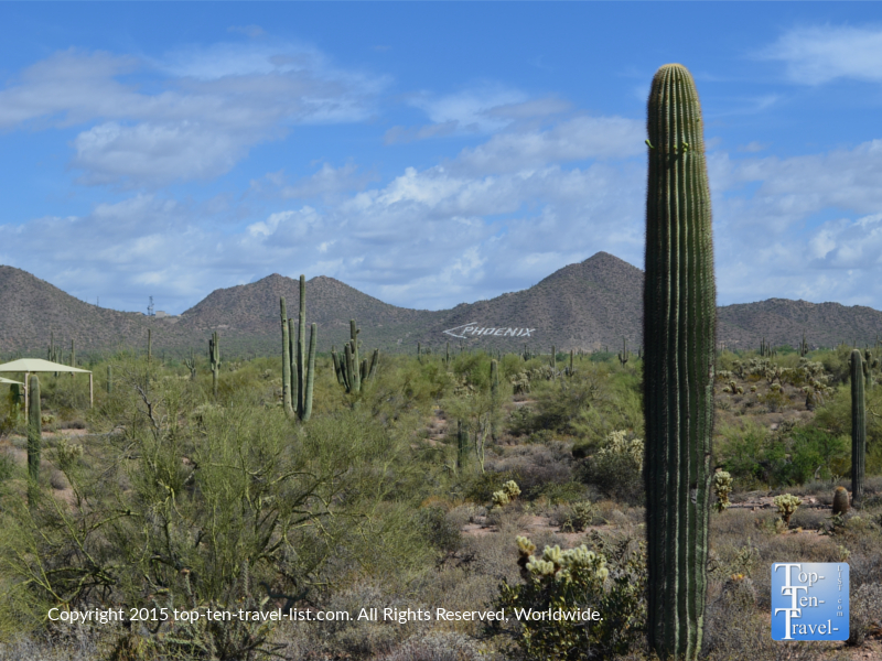 Pretty views of the Phoenix mountain from Usery Mountain's Merkle Trail - Mesa, Arizona