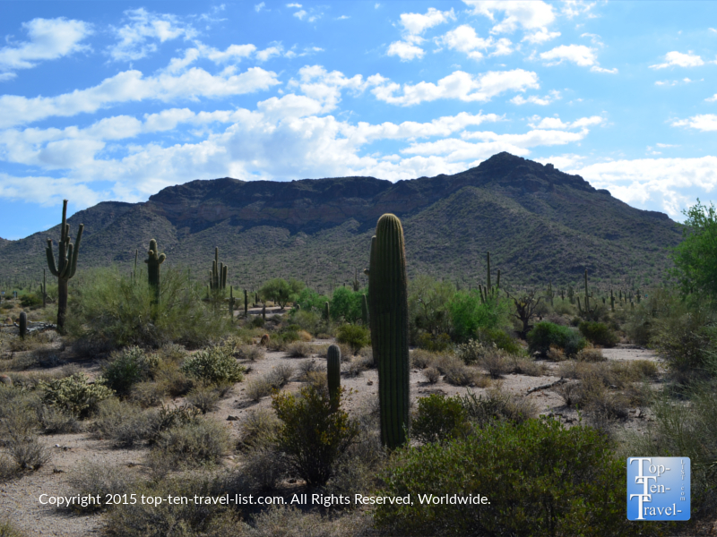 Great cactus and mountain views at Usery Mountain Park in Mesa, Arizona