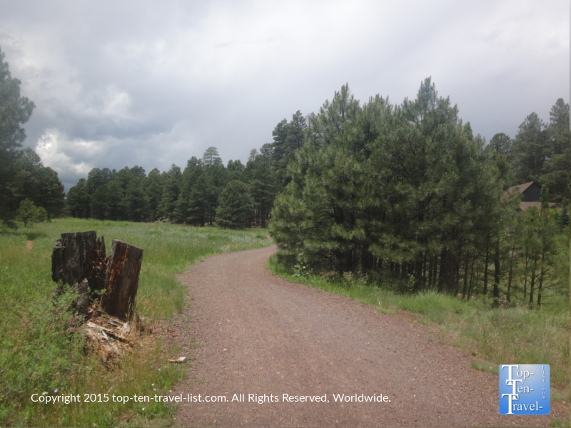 Beautiful trees on the FUTS at Fort Tuthill Park in Flagstaff, Arizona