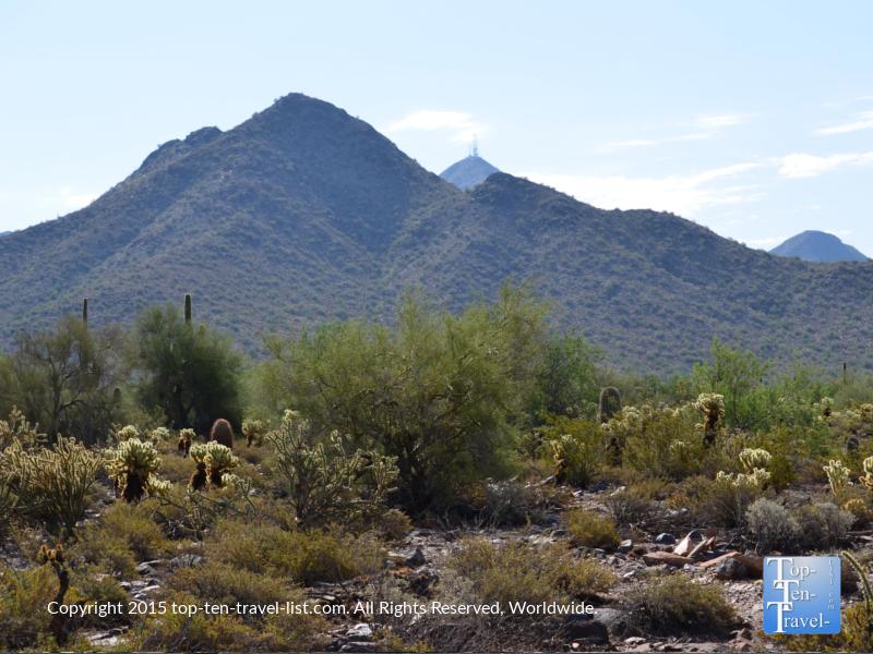 Cactus along the Horseshoe Loop trail at the McDowell Sonoran Preserve in Scottsdale, Arizona